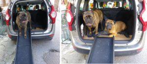 Rampe voiture gros chien